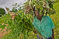 Student at the Avumadrici primary school near Nimule city in Sudan brings sweet potato roots to school.  The roots will be planted, eventually providing vegetables for the school's lunch program.