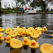 .Madison, WI - April 28, 2011. The Madison Mallards Baseball Club, Madison Parks, the Madison Parks Foundation, and West Bend are teaming up for the Remarkable Rubber Ducky River Race at Burr Jones Park, 1820 East Washington Ave. on the Yahara River. The fun-filled event will be held on May 14 from Noon - 2 p.m. and all proceeds of the event will benefit the Goodman Pool Scholarship Fund.