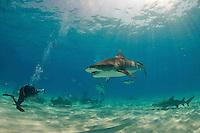 Eric Cheng photographs sharks in the Bahamas