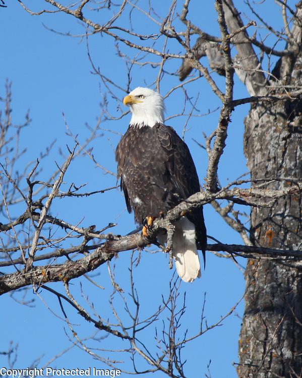 deer,eagles,bees,butterfly,blue heron birds,chickadee,