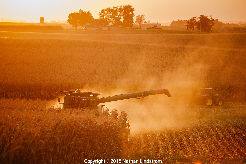 Harvesting corn in Iowa <br />