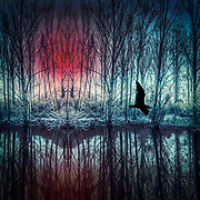 Surreal landscape with a lake and a bird flying by - manipulated photograph