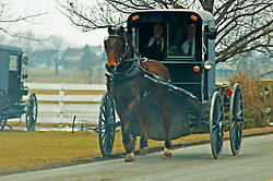 Amish buggy on way to Lancaster county mud sale. Local volunteer fire companies raise funds through what have affectionately come to be known as Mud Sales. Numerous inside and outside auctions take place simultaneously.  The winter and early spring sale dates work best for farmers as this is when they have more time available. Items sold include furniture craft items quilts building materials livestock buggies carriages tools farming supplies garden items antiques