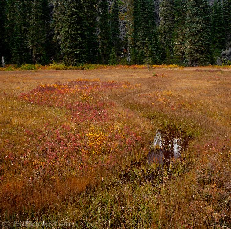 mountain meadow autumn above - photo #29