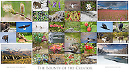"""Geared towards native North Americans, this 36-photo collage depicts the bounty of the plant and animal world with landscapes, wildflowers, and wildlife from Canada and Alaska. (42.1""""x23.5"""")"""