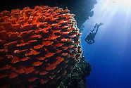 Exploring and diving Batudaka the Togean Islands of Central Sulawesi, Indonesia