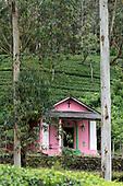 Sri Lanka. Chapel on Kelaniya Valley Estate.