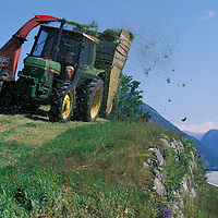 Europe, Norway, (MR)Leif Bjarte Suidal drives a tractor harvesting grass along the Sognefjord
