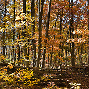 The short trail to Lower Cascade Falls passes through a split rail fence towards fall foliage, in Hanging Rock State Park, Stokes County, North Carolina, USA.  The park is 30 miles (48 km) north of Winston-Salem, and approximately 2 miles (3.2 km) from Danbury.