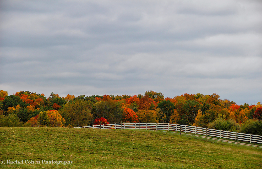 &quot;Painting October&quot;<br /> <br /> The wonders of a fence lined rural farm field in autumn! The splendor of fall foliage gracing the landscape with its magnificent color!!<br /> <br /> Autumn Landscapes by Rachel Cohen
