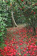 Les Camellias de la Prairie