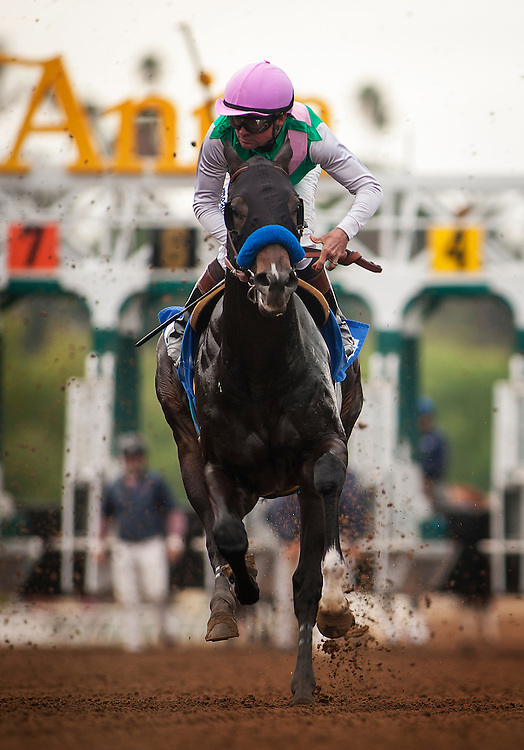 January 09, 2016: Meet Me in Rio with Kent Desourmeuax up at the Sham Stakes at Santa Anita Park, Arcadia CA. Evers/ESW/CSM