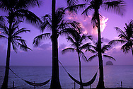 Hammocks between Palm trees, sunset at Pointe la Cherry, le Diamant, Martinique, Caribbean