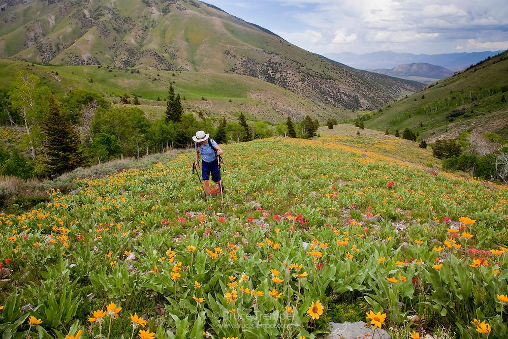 Hiking in the Stansbury Range, Utah