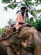 Working elephant on Middle Andaman Island