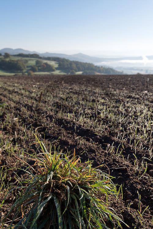 1/11/16 - PLAINE DE BOULADE - PUY DE DOME - FRANCE - Exploitation agricole dans la Limagne Sud dans les environs d Issoire - Photo Jerome CHABANNE