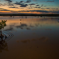 Mangrove trees in a lagoon at sunset in the Portland Bight Protected Area of Jamaica