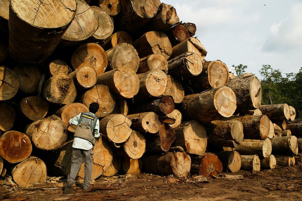 Nov. 21, 2003: Ibama police and Greenpeace inspect Selvapad logs at Jaurucu River in Para, Brazil. ©Daniel Beltra