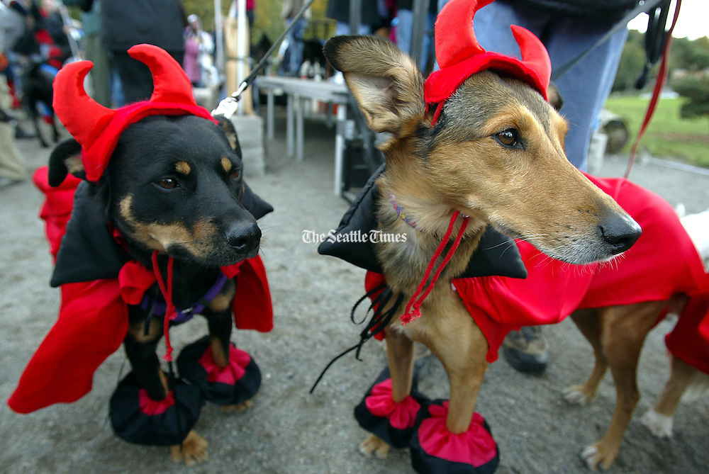Dogs dressed up as &quot;Our Little Devils&quot; wait for the judging to begin during Dog-O-Ween at Seattle's Genessee Park. The event, sponsored by Citizens for Off-Leash Areas (COLA), featured a costume contest.<br />