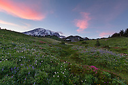 Mount Rainier looms over a wildflower covered meadow at Paradise in Mount Rainier National Park in Washington State, USA.