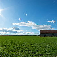 old barn in a field on a sunny day