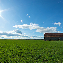 old barn in a field on a sunny day. Photographe: Marc Lapointe, Sainte-Thérèse, Blainville, Québec