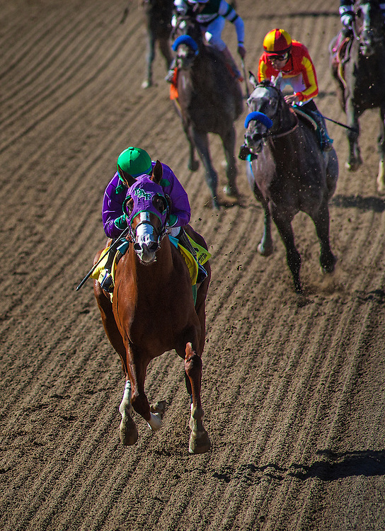 California Chrome, ridden by Victor Espinoza wins the San Felipe Stakes (G2) at Santa Anita Park on March 8, 2014 in Arcadia, California. California Chrome earned 50 points towards starting in the 2014 Kentucky Derby. (Photo by Evers/Eclipse Sportswire)