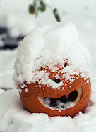 Snow covered pumpkin.