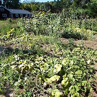 . Family Garden in Waushara County, Wisconsin.