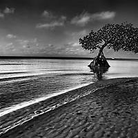 Mangrove, Long Key State Park, Florida Keys, Best camping in the Florida Keys and Key West. Photo by James Branaman for St. Petersburg Times