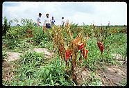 08: FARMING CROP TECH