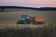 © Rob Arnold. 06/08/2014. Hampshire, UK. A John Deere tractor at sunset taking a trailer full of Spring Barley from a field on the Malshanger Estate. The estate grows mint, lavender and camomile as their 'aromatic' crop, along with the staple farm crops such as wheat, barley and oats. The oil is available direct from Summerdown Mint, but is also available from Neal's Yard in London. The tea is sold at leading retailers nationwide, including Booth's, Harvey Nichols, Partridge's & Waitrose. Photo by Rob Arnold