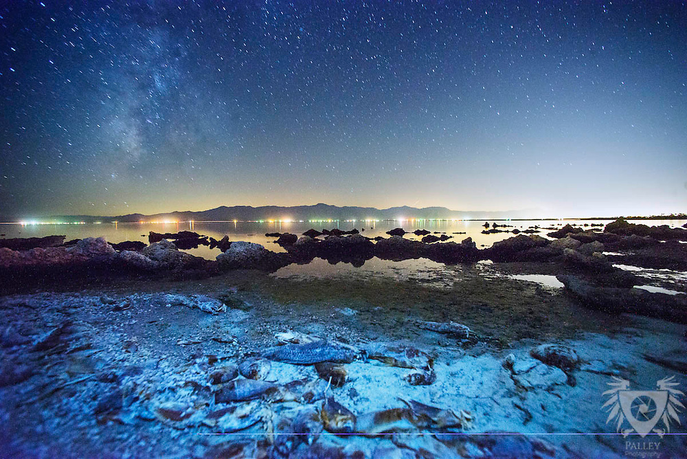 Desiccated Tilapia rot on the shore of the Salton Sea beneath the Milky Way.