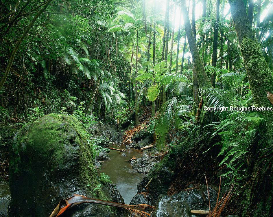 Hawaii Tropical Botanical Garden, Island of Hawaii, Hawaii USA<br />
