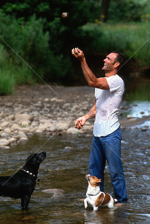 Man in wet clothes playing ball with his dogs in a stream