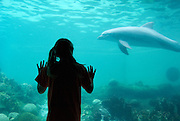 A young girl and a dolphin watch each other through the glass at the underwater viewing window at an aquarium.