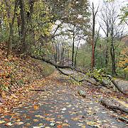 10/30/12 - Hockessin, DE - Hurricane Sandy - Brackenville Rd is close to traffic do to debris blocking the road Tuesday, Oct. 30, 2012, in Hockessin DE. ..SAQUAN STIMPSON/Special to The News Journal...SAQUAN STIMPSON/Special to The News Journal.
