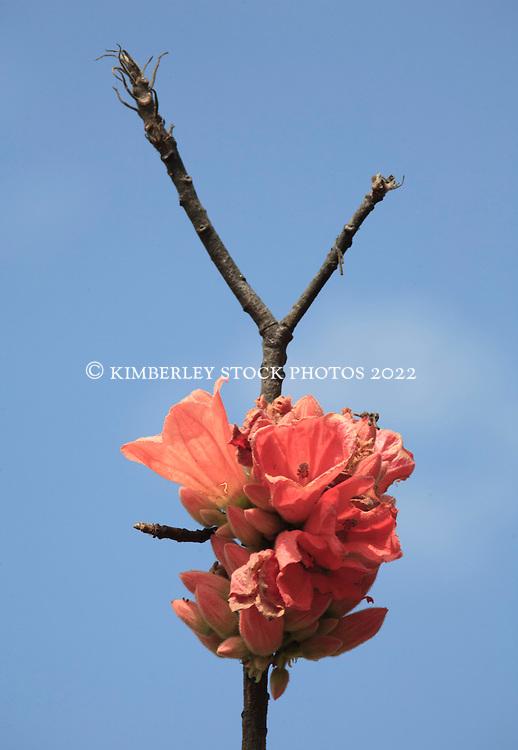 A Kimberley rose at Leadline Creek on the Kimberley coast.