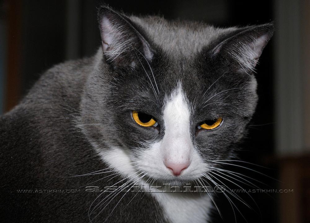 Tabasca cat