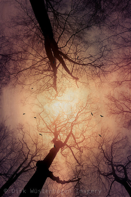 Tree against an illuminated skies with birds circling - texturized photograph