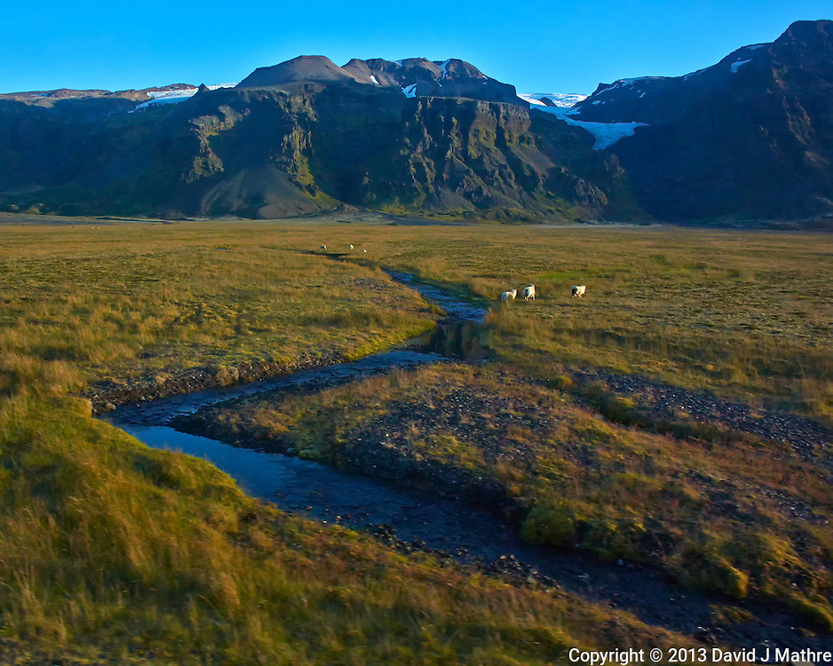 Sheep Out On a Summer Pasture Along a Stream Below the Hvannadalshnjukur Glacier in Southeastern Iceland. Image taken with a Nikon 1 V2 camera and 10 mm f/2.8 lens (ISO 200, 10 mm, f/4, 1/1000 sec). Nikonians Academy Photo Adventure.