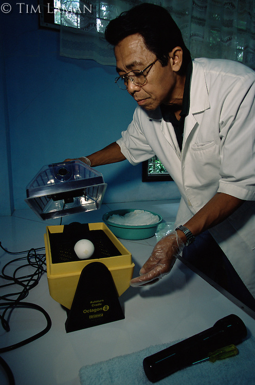 Philippine Eagle Center director, Domingo Tadena, turns and weighs a precious Philippines eagle egg being incubated at the center..Mindanao Island, Philippines.  Nov 01.