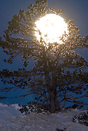 Moon rises behind tree<br /> PROPERTY RELEASED