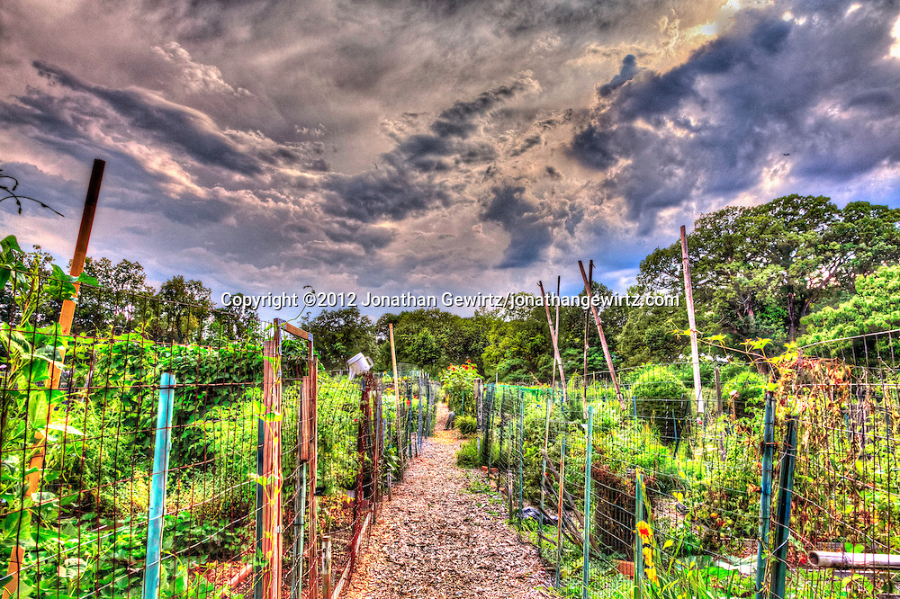 HDR view of the Newark Street Community Garden in Washington, DC after a summer storm. WATERMARKS WILL NOT APPEAR ON PRINTS OR LICENSED IMAGES.