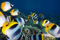 The island of Guam in the western Pacific Ocean has scenice vistas and abundant marine life