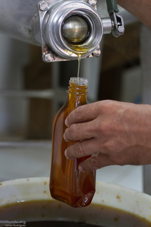 Honey being poured at the Cooperativa Las Flores' stockpile room. The Cooperativa Las Flores, a local co-op affiliated to UCASA (Union de Cooperativas Agropecuarias El Sauce), currently serves as the stockpile center for all of UCASA due to their current lack of facilities. UCASA exports honey certified by the Fairtrade Labelling Organization (FLO). El Sauce, León, Nicaragua. January 23, 2014.