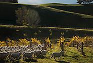WINE  - vineyards 2015 updated
