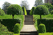 A perfectly symmetrical pair of standard hemispherical box trees (Buxus sempervirens) at the entrance to the knot garden at Hatfield Old Palace.<br />