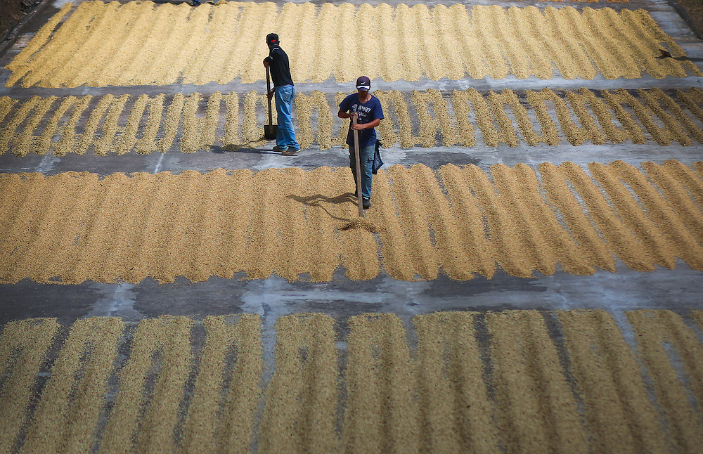 A drying patio is raked at La Candelilla coffee farm during the 2016 Starbucks Origin Experience for Partners. Photographed in January 2016. (Joshua Trujillo, Starbucks)<br /> <br /> ***model released***