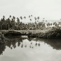 Moata'a mangrove, the last existing wetland ecosystem on Upolu island, Samoa.
